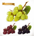 red and white table grapes wine grapes fresh vector image