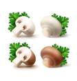 Set of Whole and Sliced Mushrooms with Parsley vector image vector image
