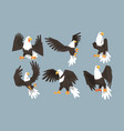 collection bald eagles in various poses pride vector image vector image