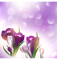 crocus flower over bright background vector image vector image
