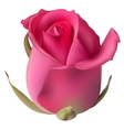 Isolated flowers Rose EPS 10 vector image vector image