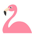 pink flamingo body exotic tropical bird zoo vector image