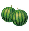 watercolor watermelons isolate on a white bkg vector image