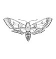 butterfly or wild moths insects bombyx mori or vector image vector image