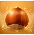 Hazelnut background vector image
