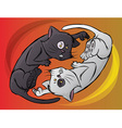 Yin Yang Kitty vector image