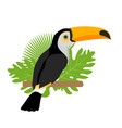 toco toucan icon is a flat cartoon style exotic vector image