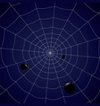 concentric web with spiders on a blue background vector image vector image