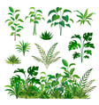 herbal green elements tropical jungle leaves and vector image vector image