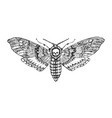 butterfly or wild moths insects death s head vector image vector image