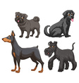 Different kind of dogs vector image