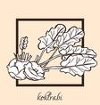 hand drawn kohlrabi vector image vector image