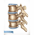 spine structure human skeleton medicine 3d icon vector image vector image