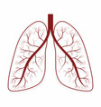 lungs human lungs anatomy symbol vector image