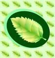 Green leaf of the tree vector image