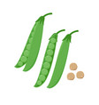 green pea pod and peas seeds vector image