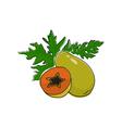 Papaya Isolated on White vector image