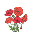 poppy bouquet red poppies flower meadow garden vector image vector image