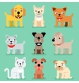 Puppy and kitten pet flat icons vector image vector image