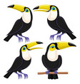 set birds toucans vector image