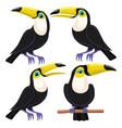 Set birds toucans