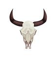 cow skull icon vector image