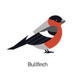 bullfinch isolated on white background cute vector image vector image