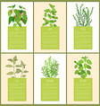 chile and mint thyme sage and oregano spices set vector image