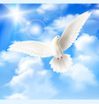 white pigeon background vector image vector image
