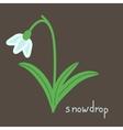 Snowdrop plant vector image