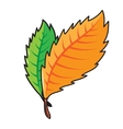 Autumn bright fall leaves isolated on white vector image