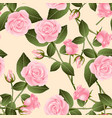 beautiful pink rose - rosa on beige ivory vector image vector image