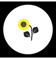 black and yellow sunflower isolated black icon vector image