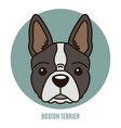portrait boston terrier vector image vector image