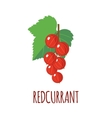 Redcurrant icon in flat style on white background vector image