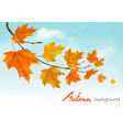 autumn nature background with colorful leaves and vector image vector image