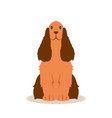 fluffy spaniel quietly sits on a white background vector image