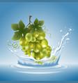 grape in water splash vector image vector image