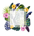square frame with flowers plants background vector image vector image