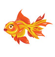 cartoon goldfish stylized goldfish aquarium fish vector image
