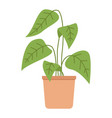 decorative potted plant houseplant with long vector image