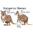 kangaroo and body part vector image vector image