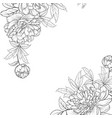 peony graphic line sketch vector image
