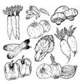 set hand drawn vegetables organic herbs vector image