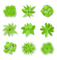 trees top view vector image