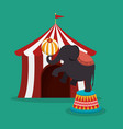 elephant circus show icons vector image vector image