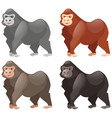 gorillas in different colors vector image vector image