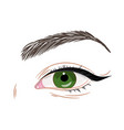 green female eye with eyeliner vector image vector image