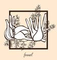 hand drawn fennel vector image vector image