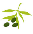 olive with leaves branch organic natural vector image